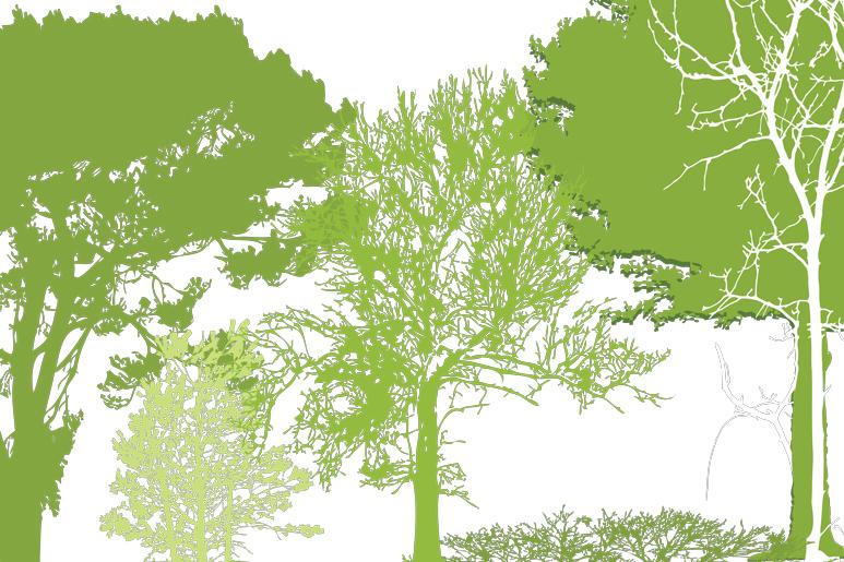 עיצוב טפט קיר לחלל הפנים בצורת צללים של עצים וענפים