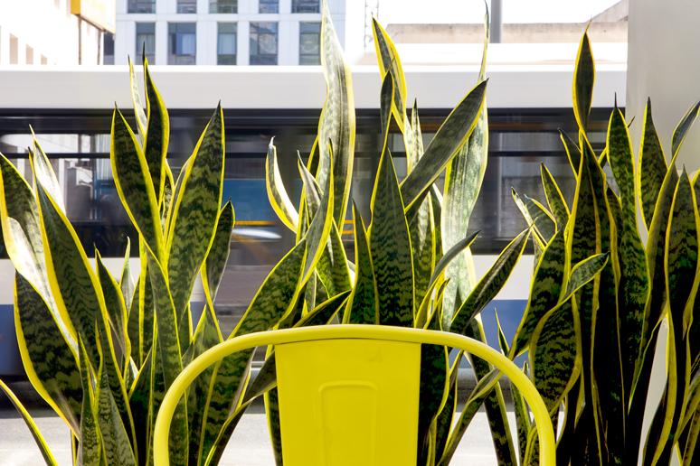 צמחיה צהבהבה בשילוב כסאות פח צבוע בפינות הישיבה בחוץ מרעננים את הרחוב הסואן והאפרפר